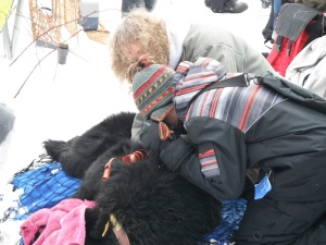 Checking the Bear's Pulse